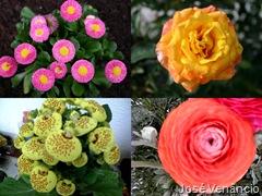 Flores-Combinar no PhotoScape