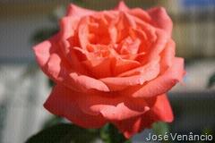 Flores-Filtro-textura-puzzle no PhotoScape