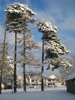Snow 23
