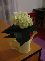Flowers! 1