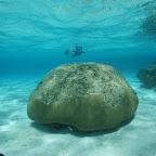 Schnorcheln am Innenriff in den Tobago Cays