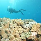 Schöne Riffe und super klares Wasser