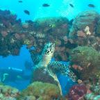 Schildkröte schwimmt zwischen der Reling