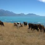So eine Aussicht möchte ich als Kuh auch haben!