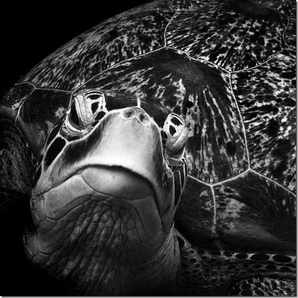 Fotografias em preto e branco do oceano (6)