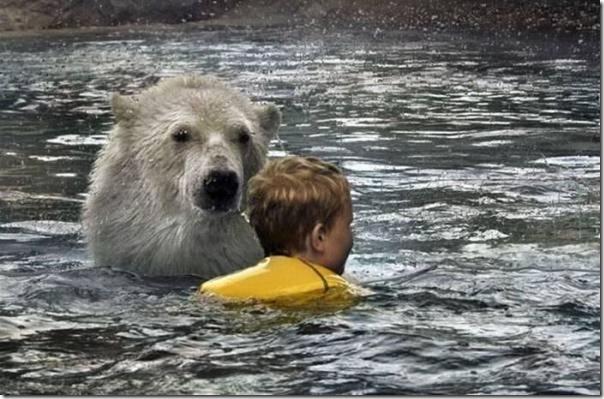 Crianças nadando com os ursos polares (1)