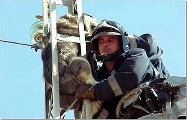 O resgate de um cão (3)