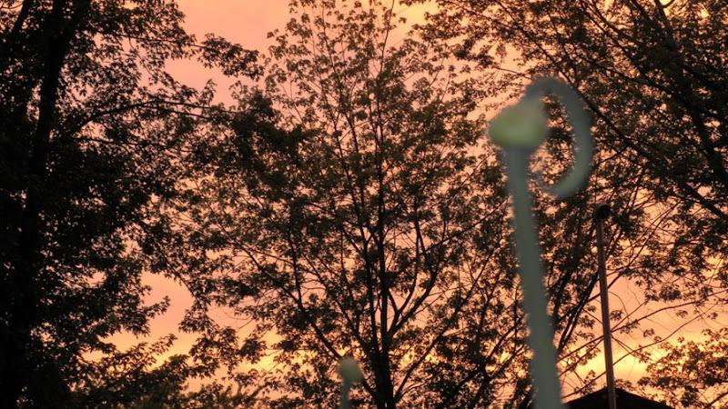 Garden Sunset Juen 18 2010 (47)_435For Email.Online