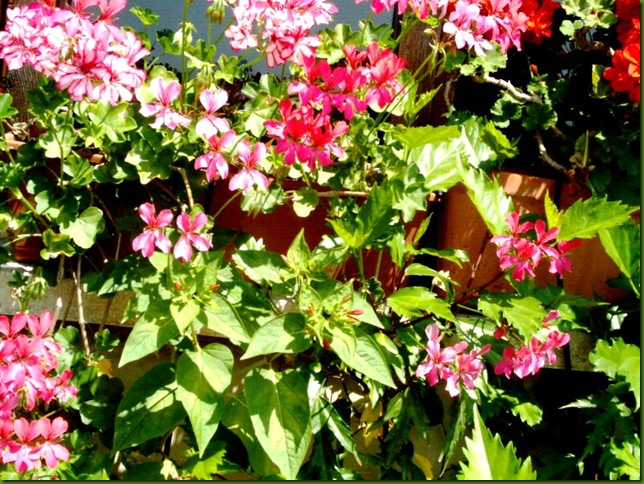 flores 035