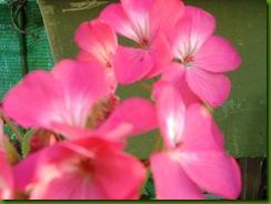 flores 049