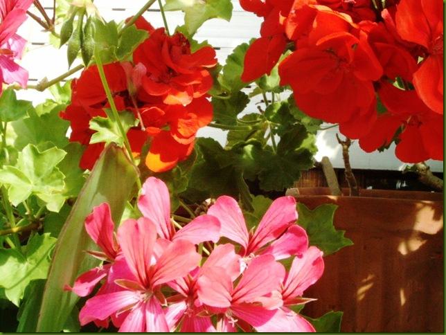 flores 016