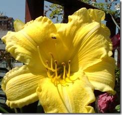 flores 033