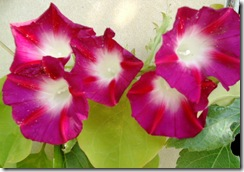 flores de setiembre2 031