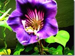 flores 055