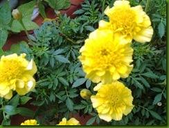 flores 060