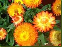 flores de setiembre2 015