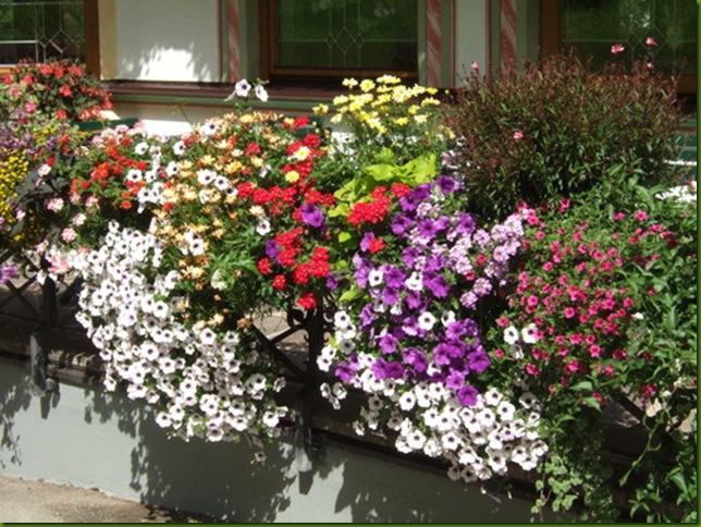Balcón florido en Zillertal, Tirol, Austria 3
