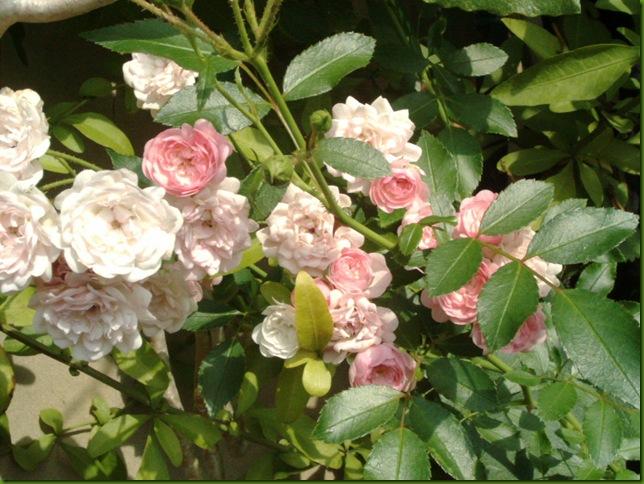 flores 019