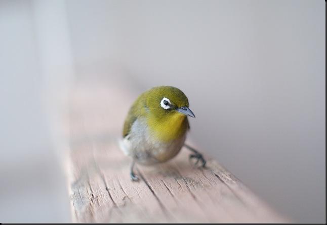 bird (26)