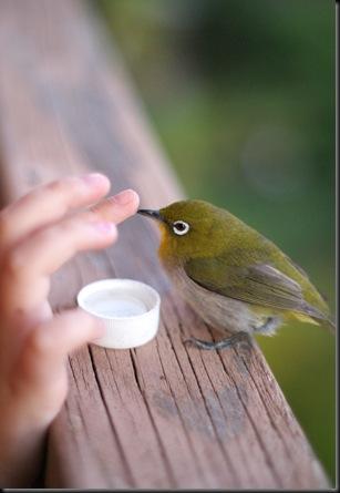 bird (46)