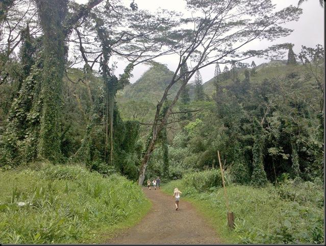 Manoa Falls (1)