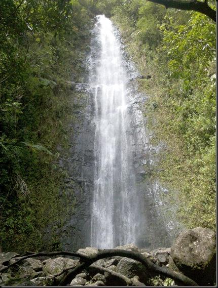 Manoa Falls (21)