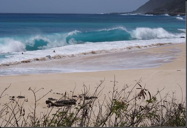 Kaena Beach 061
