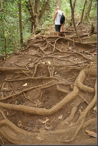 Maunawili hike 137