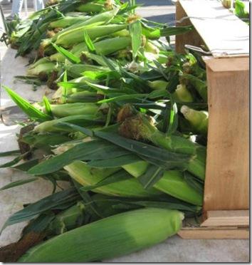 davenport corn 2