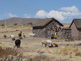 Habitat traditionnel avec ses lamas