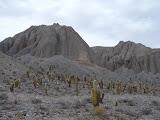 Cactus à profusion