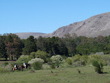 Vert, chevaux, collines