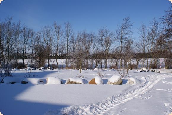frugtbuske i sne