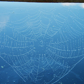 Spider web early in the morning by Tanja Strma Strmotic - Nature Up Close Webs