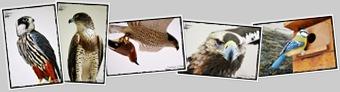 Ver Animales Casa de la Madera