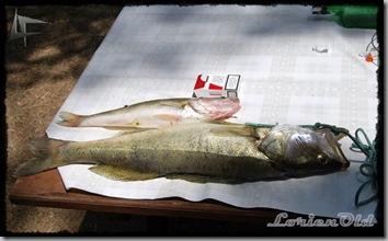 Pescado_en_Cuerda_del_Pozo