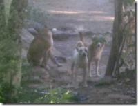 Some random dogs