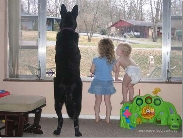 1 - niños con perros misimagenesdivertidas  (10)