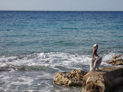 Ia a passear em Cozumel e tive de parar quando vi o pelicano junto ao mar... apenas mais um momento no meio de tantos ao longo deste ano que está perto do fim...