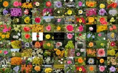کلکسیون گیگاپیکسلی گل ها
