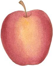 Apple-775475