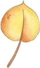 HW Leaf3-713744