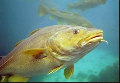 pescado 1