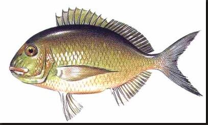 pescado 4