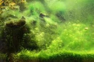 Algae-children-of-sea