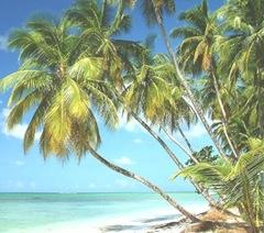 Coconut-kalpavruksha