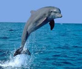 Dolphins-Intelligent-Mammal