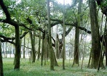 Indian-Botanic-Garden-largest
