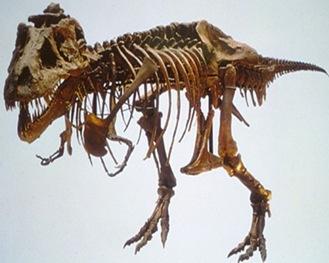 Paleontology-fossil