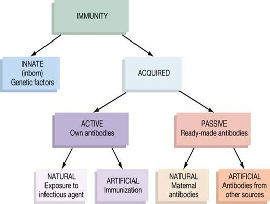 immunity-types7